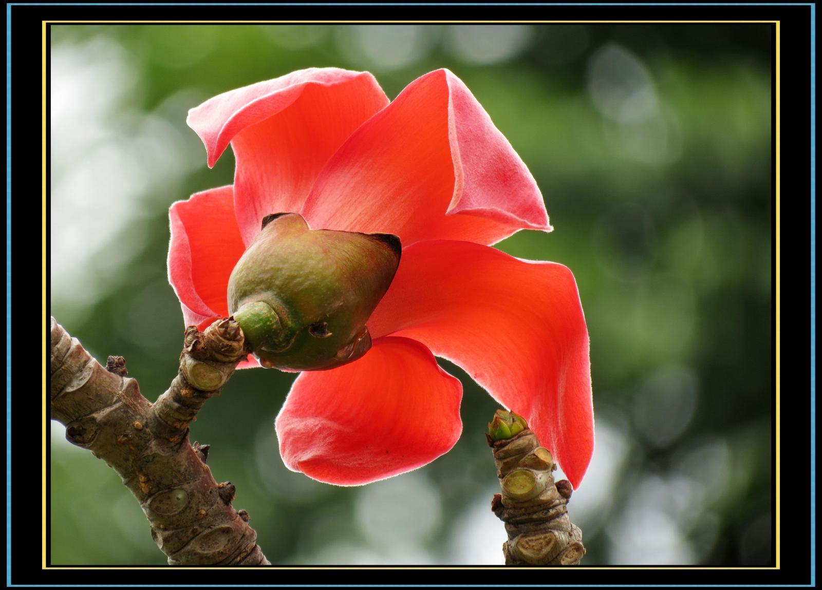 木棉花 - 看一看的日志