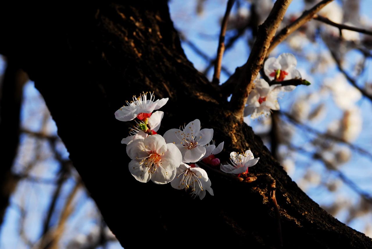 北京动物园的春天
