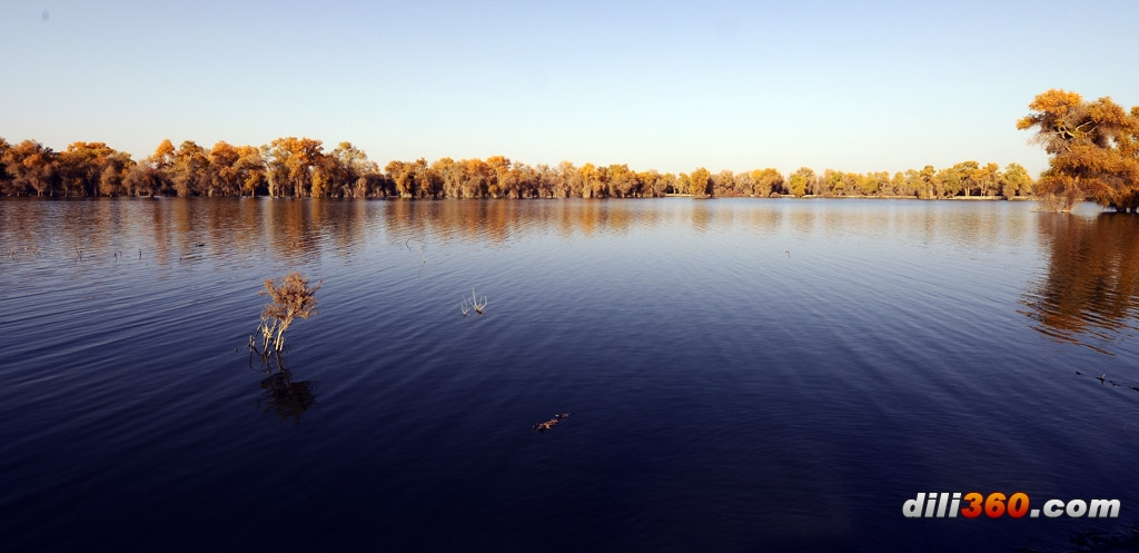 金秋胡杨 在新疆的塔里木河流域 摄影天地