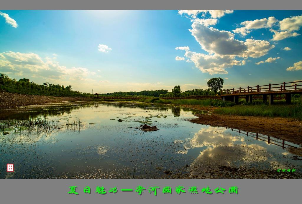 夏日魅力-----孝河国家湿地公园