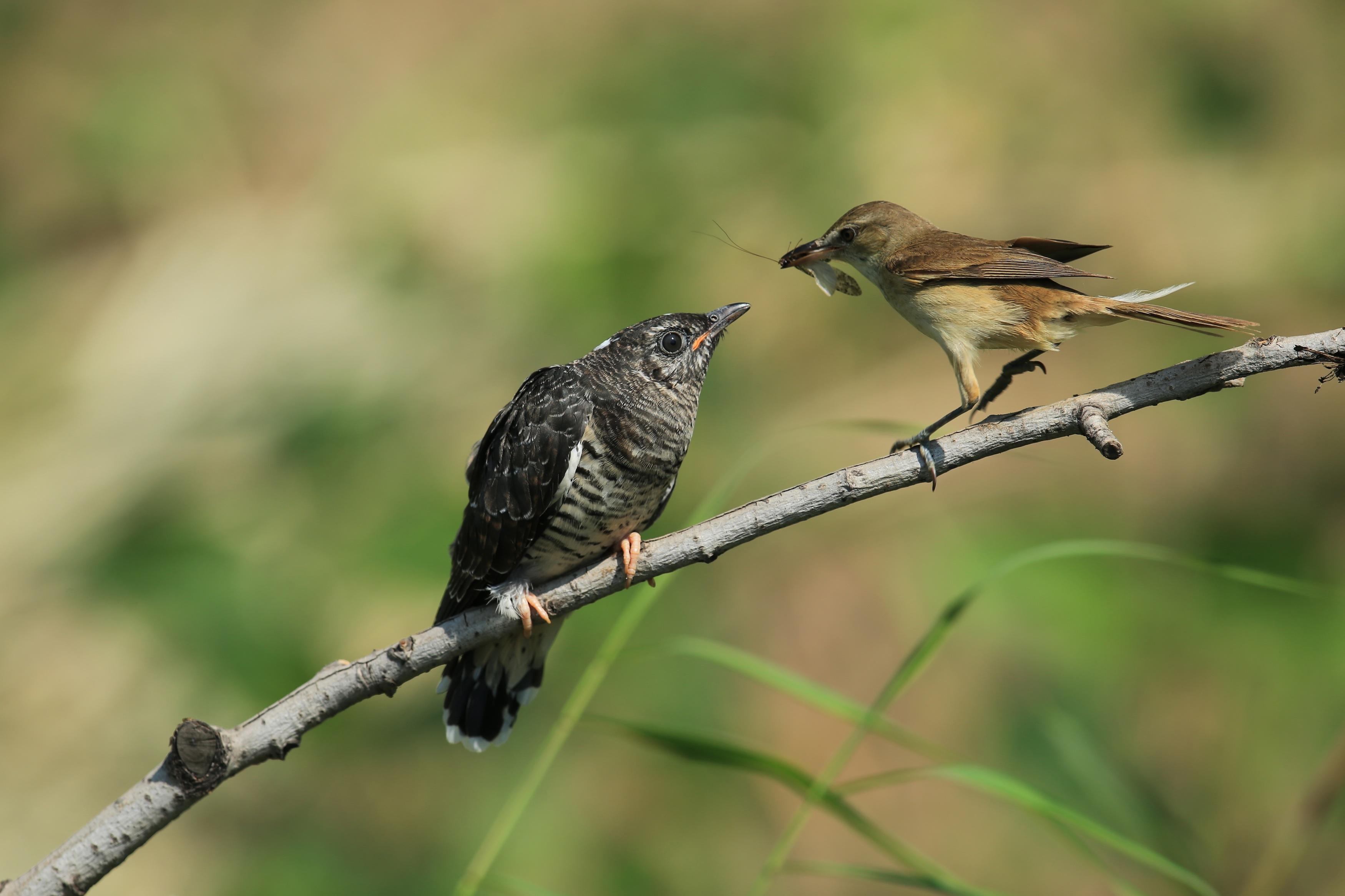 关于动物之间的母爱