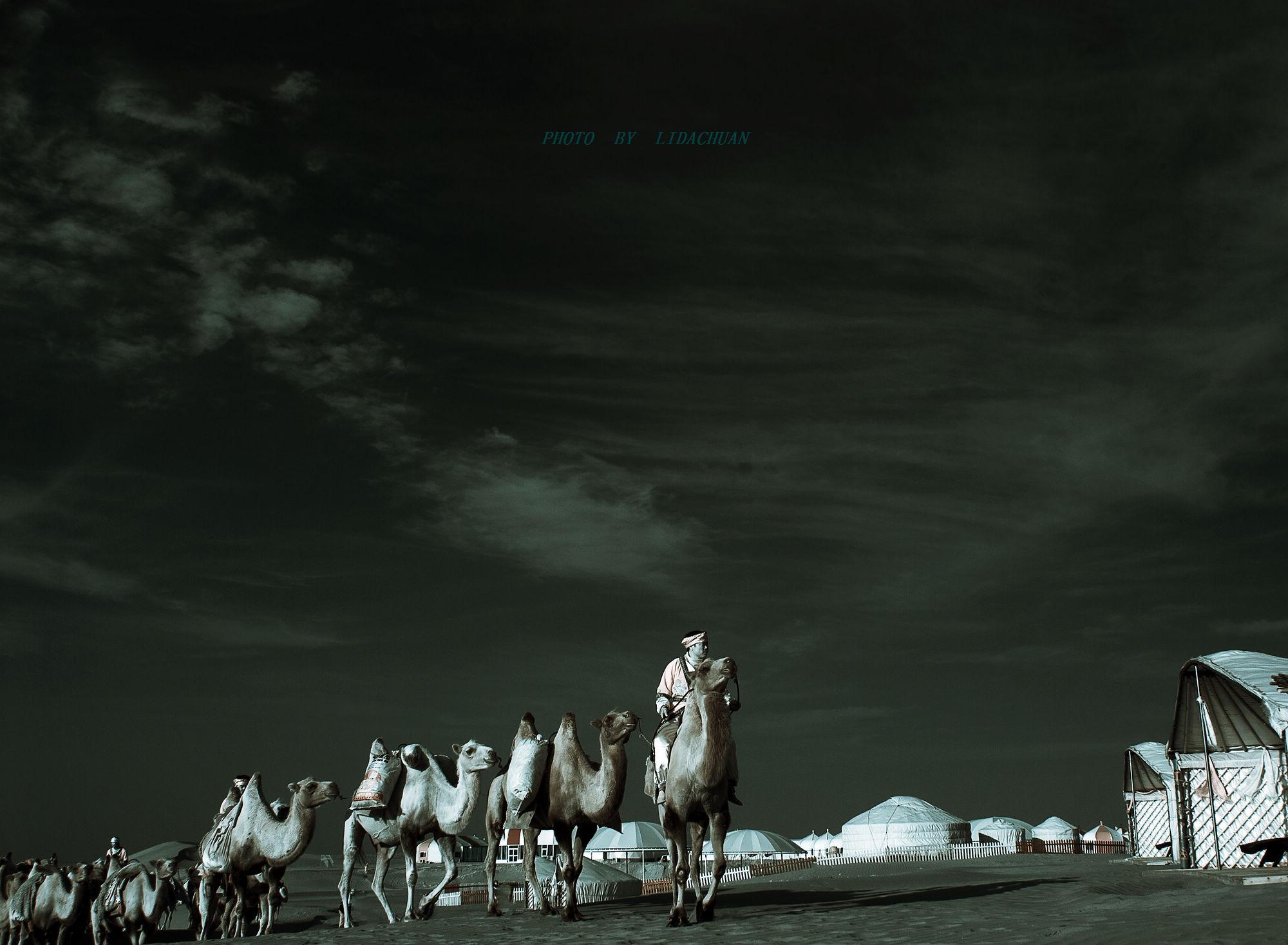 答:天边的骆驼 作词:朱思思 作曲:朱思思 演唱:蒋大为 天边走来一队队跋涉的骆驼 走啊走啊走在那茫茫的沙漠 风里雨里高昂着它的头 大雪飞沙锻炼了它的性格 高高的骆峰从来不寂寞 茫茫的翰海里印着它脚窝 沉甸甸的骆背上 骆着它的希望 骆铃声声响...