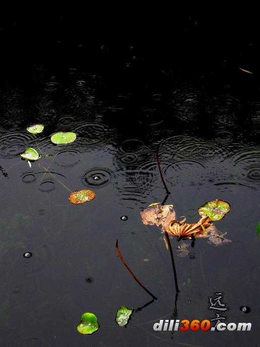 """西子湖畔警花出更 """"鏗鏘玫瑰""""成西湖別致風景"""