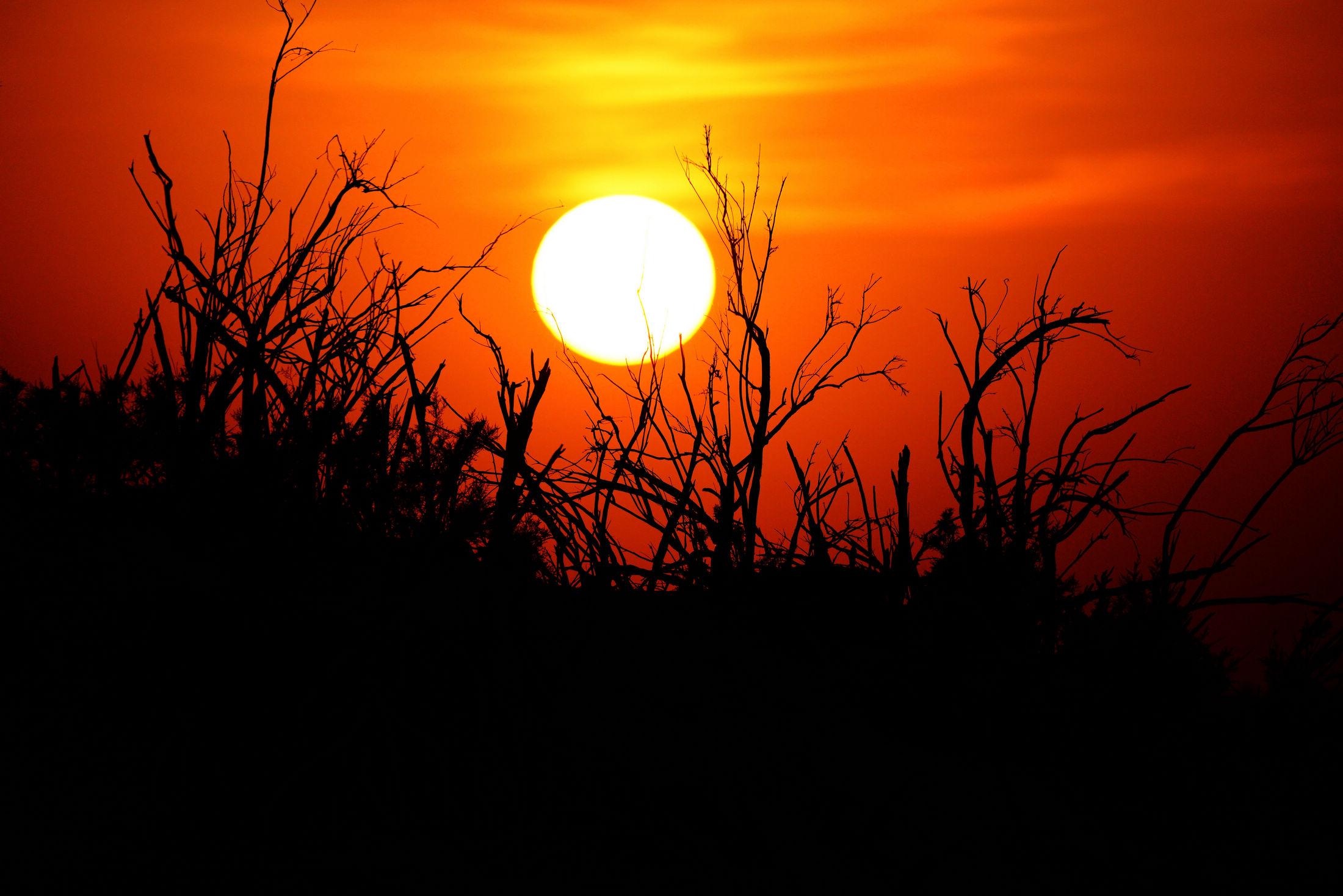 大漠里的剪影——内蒙古黑城遗址怪树林里观日落