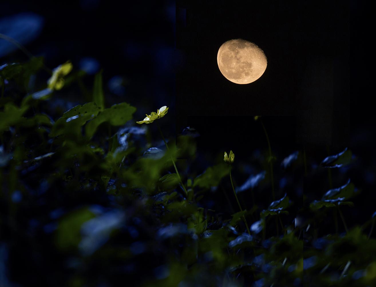 血月亮-2014摄影月赛-原创摄影
