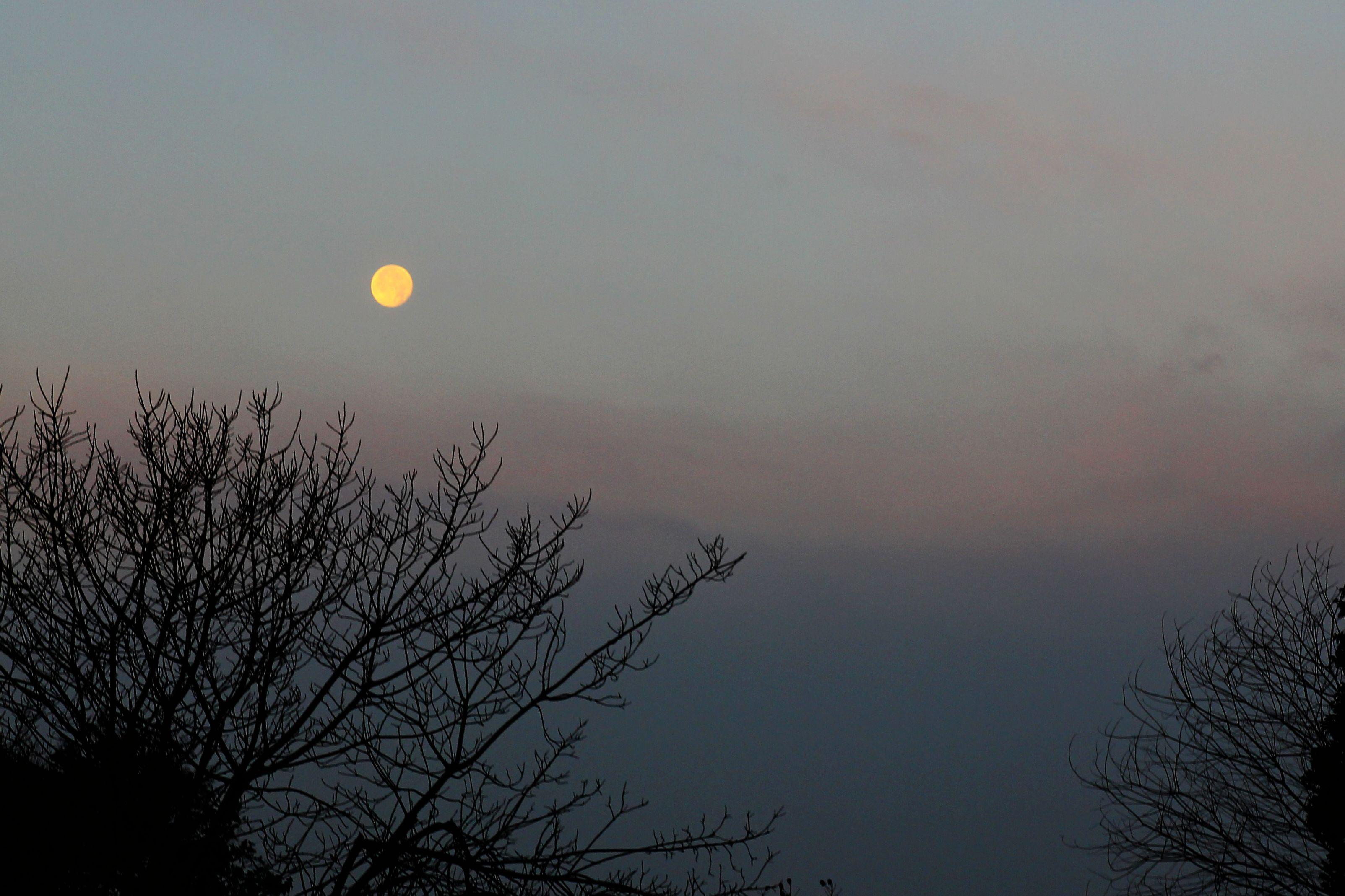 圆月和桂树手绘图