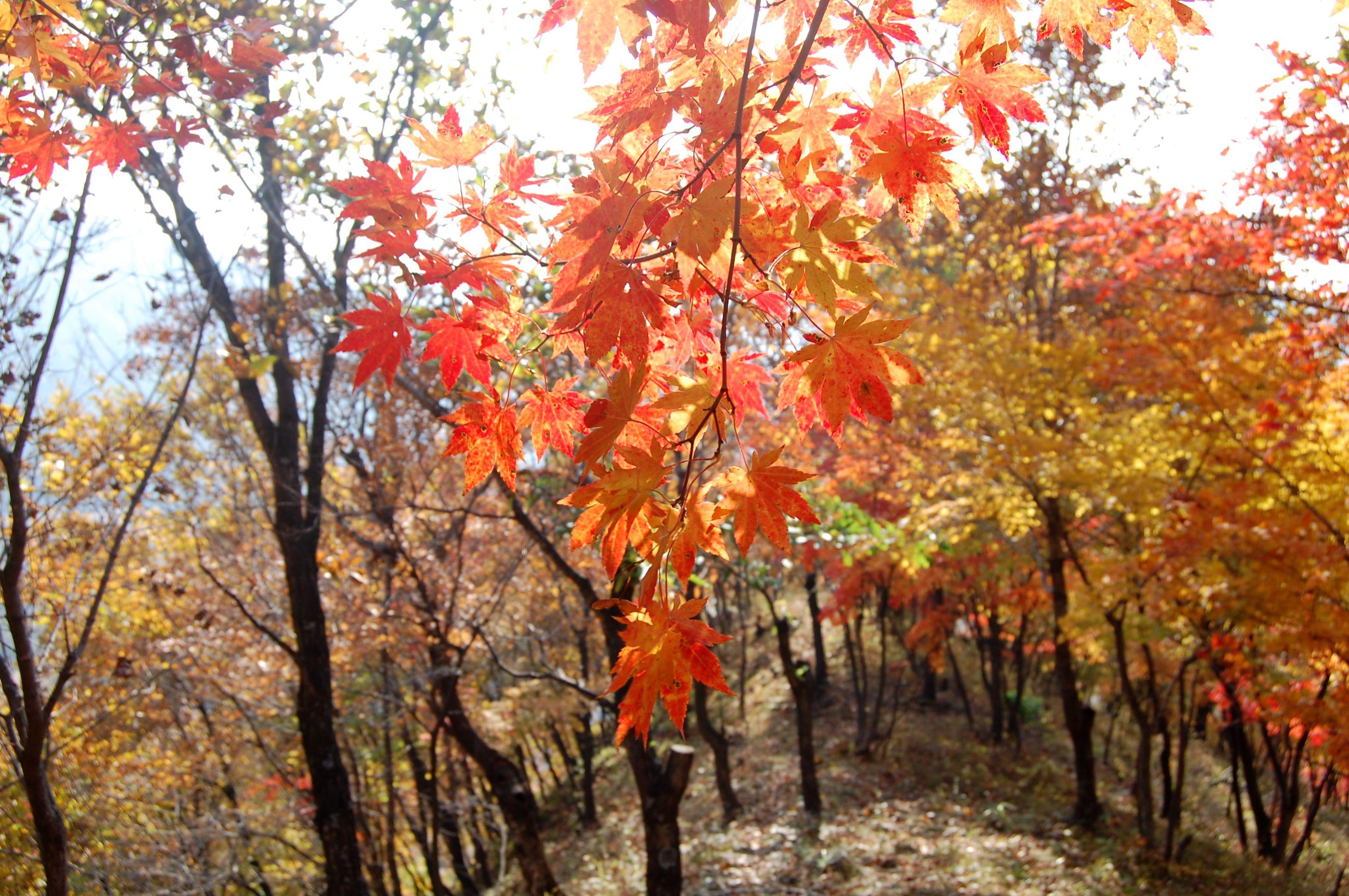 本溪洋湖沟——中国最美的枫叶