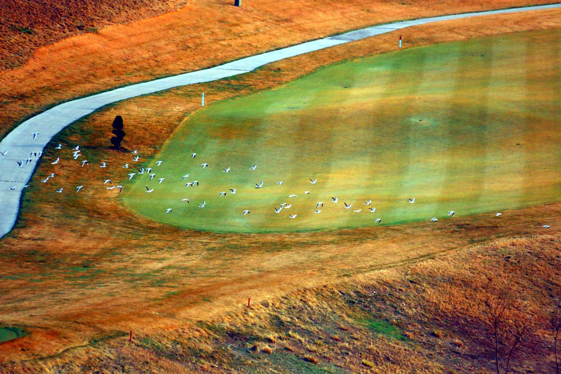 俯拍青岛石老人高尔夫球场